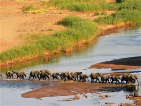 Royal Olifants Safari Lodge image6