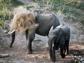Royal Olifants Safari Lodge image0
