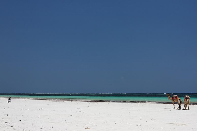 Diani beach b and b